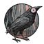 Les Franchises Cabalvision par roster Black-birds-64