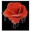 Les records de la Cabalvision Elfik-roses-64